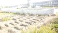 Tự ý khai quật 42 ngôi mộ cổ, công ty đồ gỗ có nguy cơ hầu toà