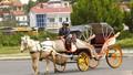 Tản mạn chuyện xe ngựa trên thế giới