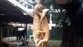 Quảng Bình: Cả nhà nhập viện vì ăn nhầm rễ cây độc tưởng là sâm