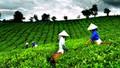Bổ sung ưu đãi cho DN đầu tư vào lĩnh vực nông nghiệp, nông thôn