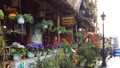 Ngắm những bậc thềm hoa đẹp ngây ngất ở Sapa