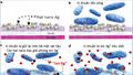 Nano bạc và những ứng dụng tuyệt vời trong diệt khuẩn