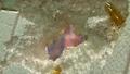 Hãi hùng chứng kiến dầu cá Omega 3 tiêu hủy miếng xốp