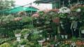 Tưng bừng hương sắc Tết  trên chợ hoa Vạn Phúc