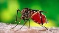 Công bố hết dịch vi rút Zika