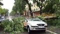 Hà Nội: Gió giật đổ cây, tung người trên phố