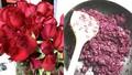 Tiếc 99 bông hồng cầu hôn, cô gái trẻ vặt cánh hoa làm mứt