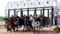 Có giới hạn DN kinh doanh đặt cược đua ngựa, đua chó?