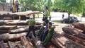 Vụ trùm gỗ Phượng 'râu': Kiểm điểm 9 cán bộ kiểm lâm