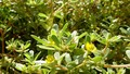4 loại thực phẩm trong vườn nhà có khả năng chống nhiễm trùng tốt