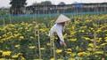 Giá hoa tươi trước Tết chưa bằng 1/3 năm ngoái