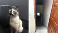 Chú mèo 'siêu anh hùng' giúp em bé thoát chết trong gang tấc