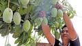 Những đồng vốn nhỏ góp nên mùa quả chín