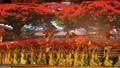 Hải Phòng: Chi 45 tỷ đồng tổ chức Lễ hội Hoa Phượng Đỏ lần thứ IV