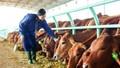 HAGL đẩy mạnh đầu tư phát triển nông nghiệp khép kín tại Việt Nam - Lào - Campuchia