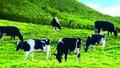 Bảo hiểm nông nghiệp: Thiếu hấp dẫn doanh nghiệp và người dân