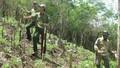 Đại biểu QH bức xúc vì vi phạm đất rừng tràn lan