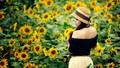 Lời kêu cứu của những cánh đồng hoa