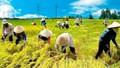 Năm 2016: Ngành nông nghiệp giảm  khoảng 100.000ha đất trồng lúa