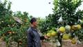 Đẹp sửng sốt với cây 10 loại trái