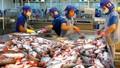 Chương trình giám sát cá da trơn: Việt Nam có thể khởi kiện Mỹ ra WTO?