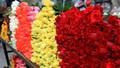 Thị trường 8/3: Hoa truyền thống đắt khách