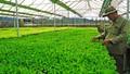 Nông nghiệp công nghệ cao: Vẫn khó tiếp cận vốn