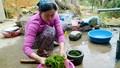 Kỳ bí ngôi làng trường thọ nhờ ăn rêu đá