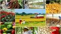 Tín dụng cho nông nghiệp, nông thôn: 70% dân số - 18% dư nợ