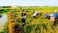 """Lập """"đội đặc nhiệm"""" để tái cơ cấu ngành Nông nghiệp"""