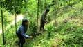 """Thêm quy định về """"sở hữu rừng"""""""