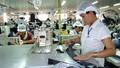 Hai phương án hỗ trợ thuế cho các doanh nghiệp nhỏ và vừa