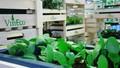 Hàng ngàn nông hộ đăng ký tham gia mô hình sản xuất của Vingroup