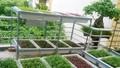 Thiết bị trồng rau sạch hút mẹ bỉm sữa