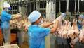 Thịt gà Việt lần đầu sang Nhật Bản