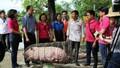 """LienVietPostBank """"giải cứu"""" đàn lợn, hỗ trợ người chăn nuôi"""
