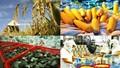 Xuất khẩu nông - lâm - thủy sản đạt mốc trên 17 tỷ USD
