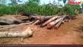 Lâm tặc tàn phá rừng 267 ở Ea Súp