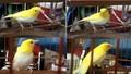 Kỳ cục án từ những vụ trộm chim