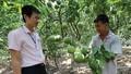 Vốn chính sách ở nông thôn Văn Lâm