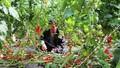 Lâm Đồng đi đầu trong ứng dụng công nghệ trong nông nghiệp