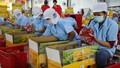 Thanh long Việt Nam được xuất khẩu sang Australia