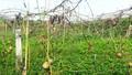 Quế Phong, Nghệ An: Cần rà soát lại toàn bộ quá trình thu hồi đất Dự án trồng chanh leo