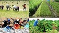 """Hỗ trợ nông nghiệp 2.000 tỷ đồng/năm: """"Một cánh én nhỏ"""" có làm nên """"Mùa Xuân""""?"""