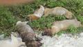 Một đối tượng trộm chó bị đánh hội đồng tử vong