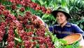 Đắk Lắk: Xuất khẩu 445 triệu USD vụ cà phê 2016 - 2017