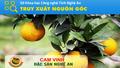 Cam Vinh: Bất cập trong quy hoạch và thương hiệu