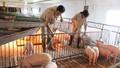 Gỡ bỏ 12 thủ tục sản xuất kinh doanh chăn nuôi, thủy sản