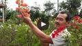 Điểm báo 29/11/2017: Người dân trồng hoa giấy lao đao vì tin đồn hoa chứa chất gây ung thư