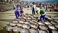 Quản lý nguồn lợi thủy sản: Phân cấp mạnh cho các địa phương!